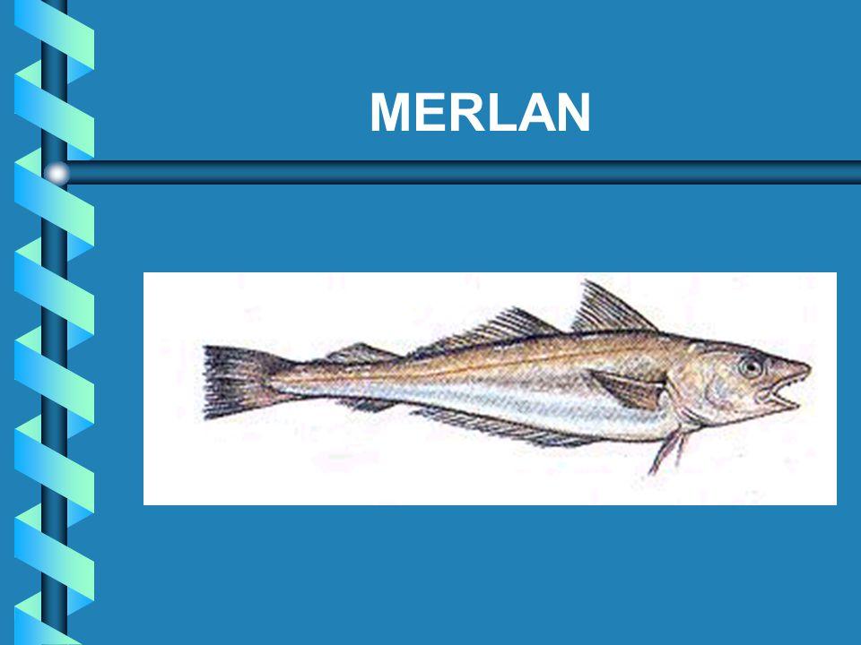 MERLAN