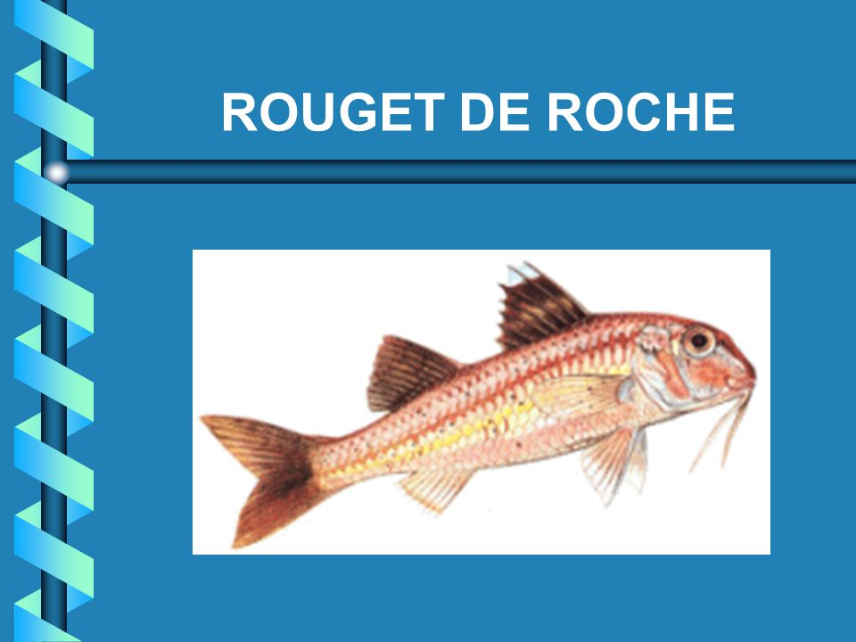 ROUGET DE ROCHE