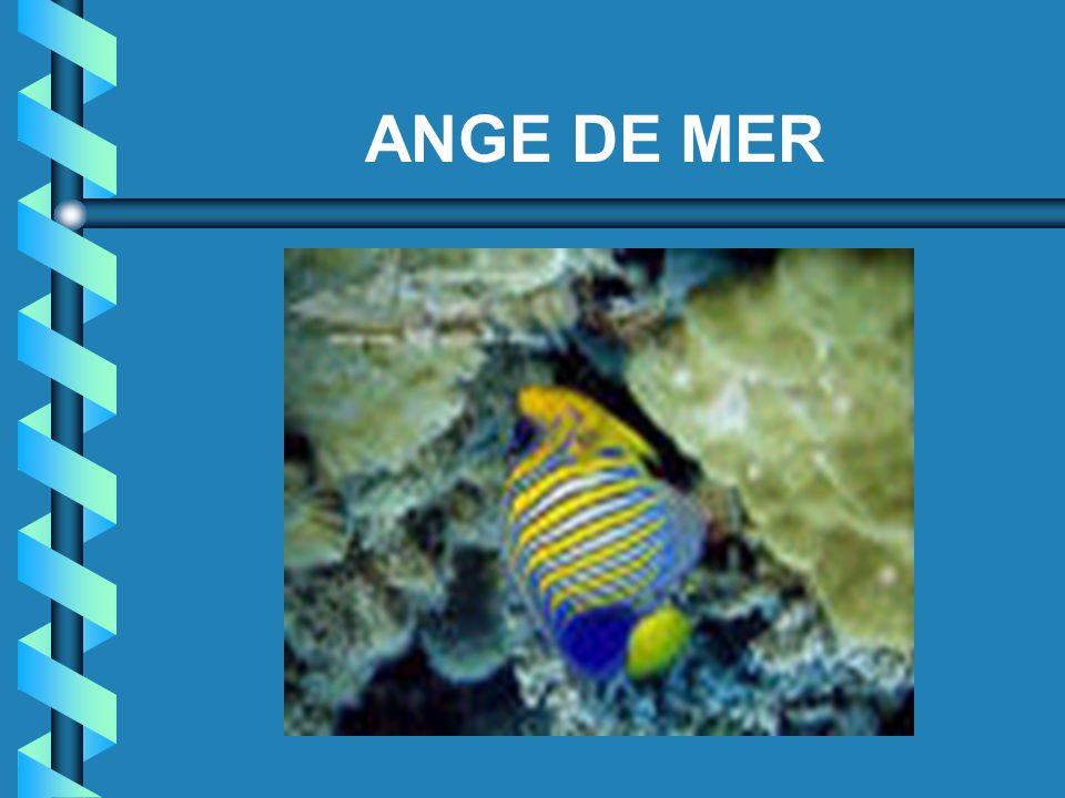 ANGE DE MER