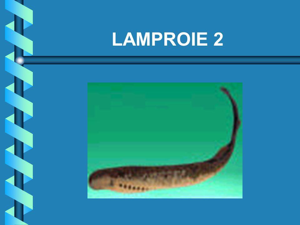 LAMPROIE 2