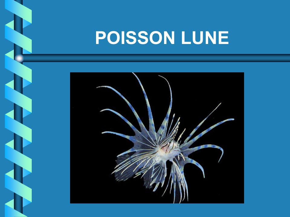 POISSON LUNE