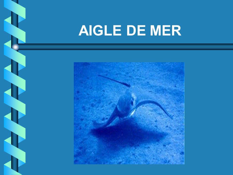 AIGLE DE MER