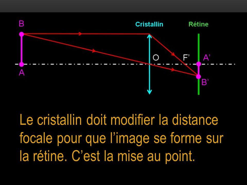 Le cristallin doit modifier la distance focale pour que l'image se forme sur la rétine.