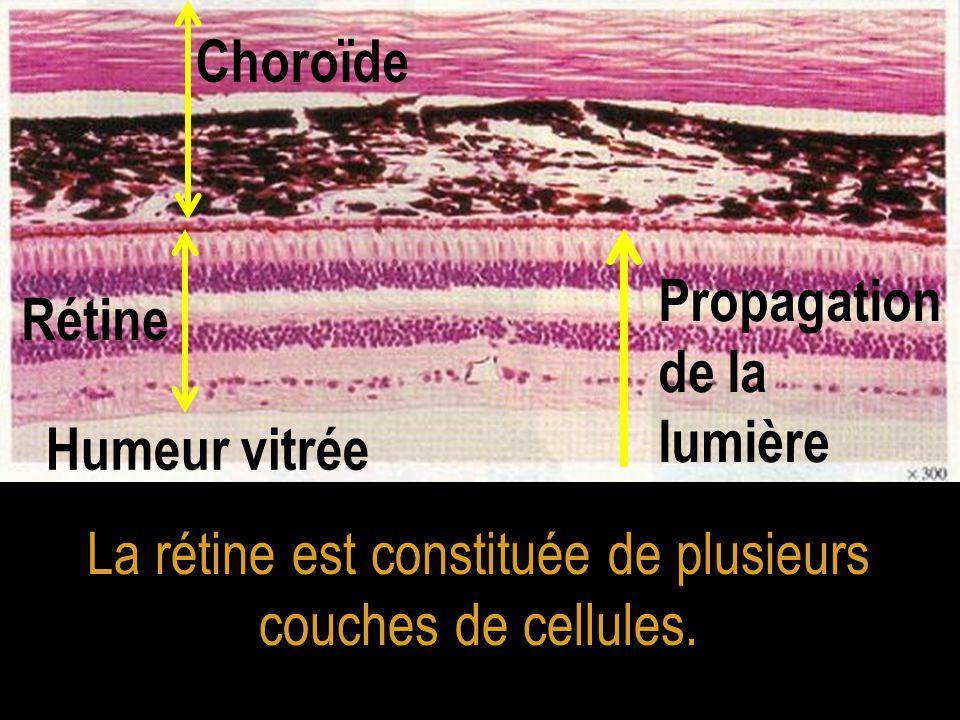 La rétine est constituée de plusieurs couches de cellules.