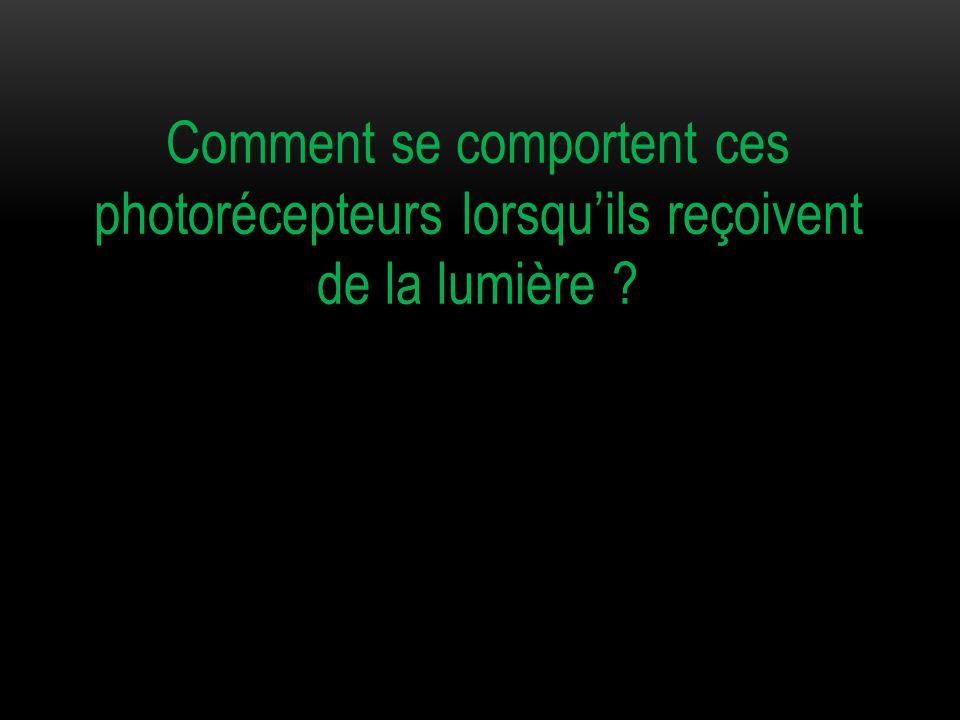 Comment se comportent ces photorécepteurs lorsqu'ils reçoivent de la lumière