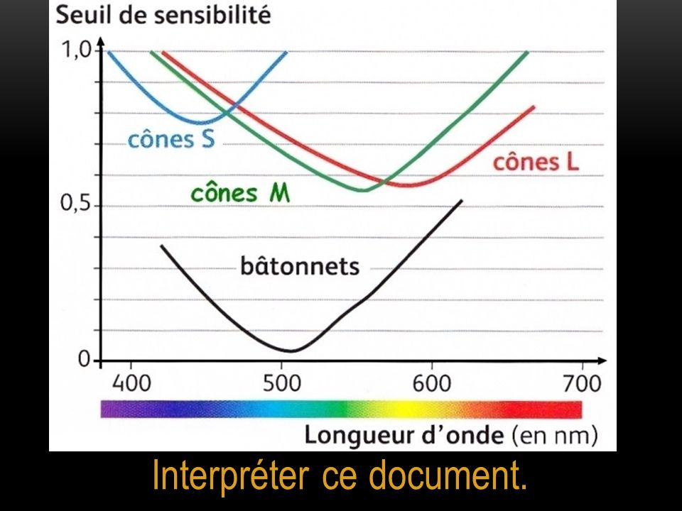 Interpréter ce document.