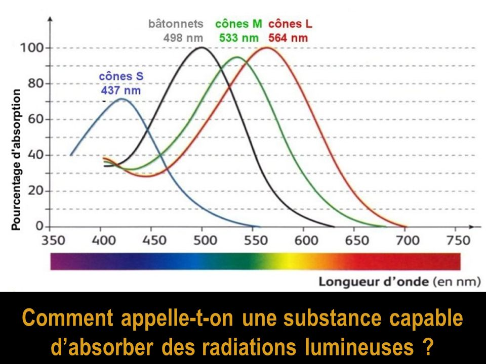 Comment appelle-t-on une substance capable d'absorber des radiations lumineuses