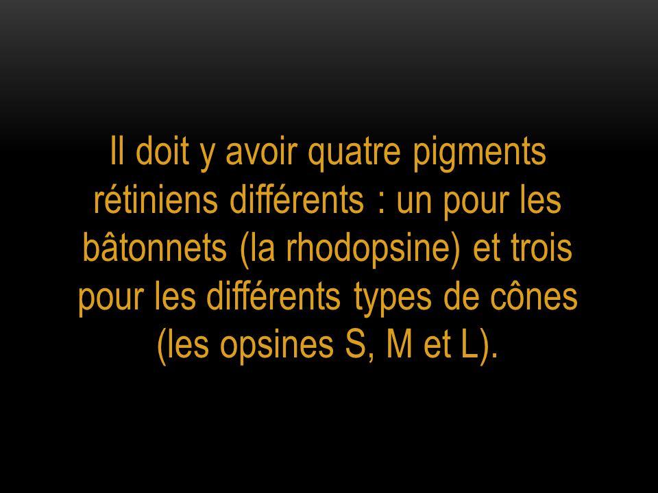 Il doit y avoir quatre pigments rétiniens différents : un pour les bâtonnets (la rhodopsine) et trois pour les différents types de cônes (les opsines S, M et L).
