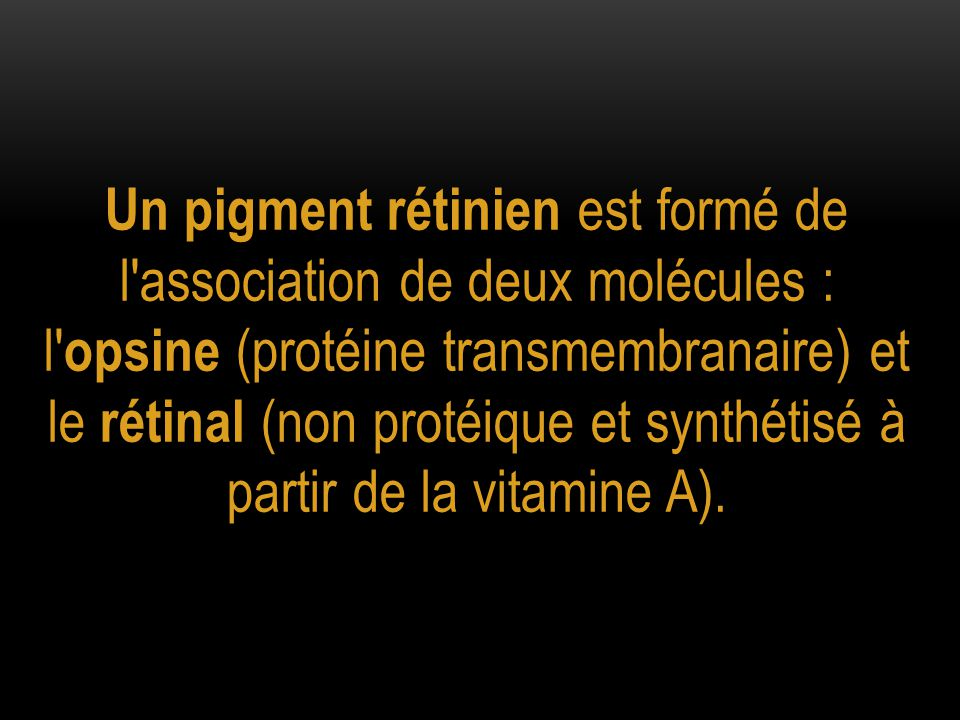 Un pigment rétinien est formé de l association de deux molécules : l opsine (protéine transmembranaire) et le rétinal (non protéique et synthétisé à partir de la vitamine A).