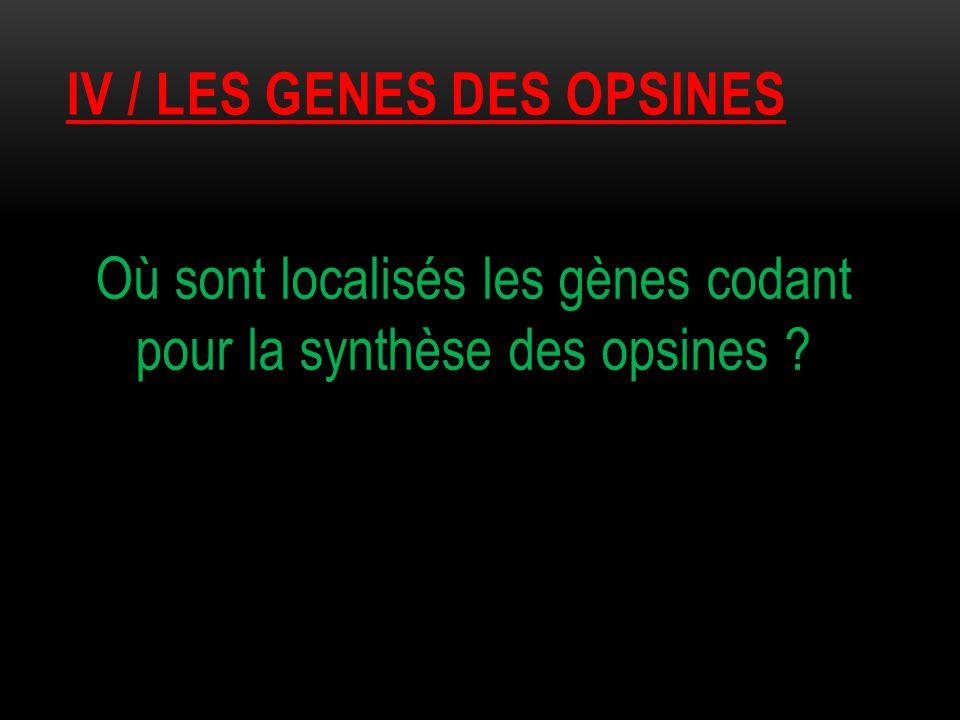IV / les genes des opsines