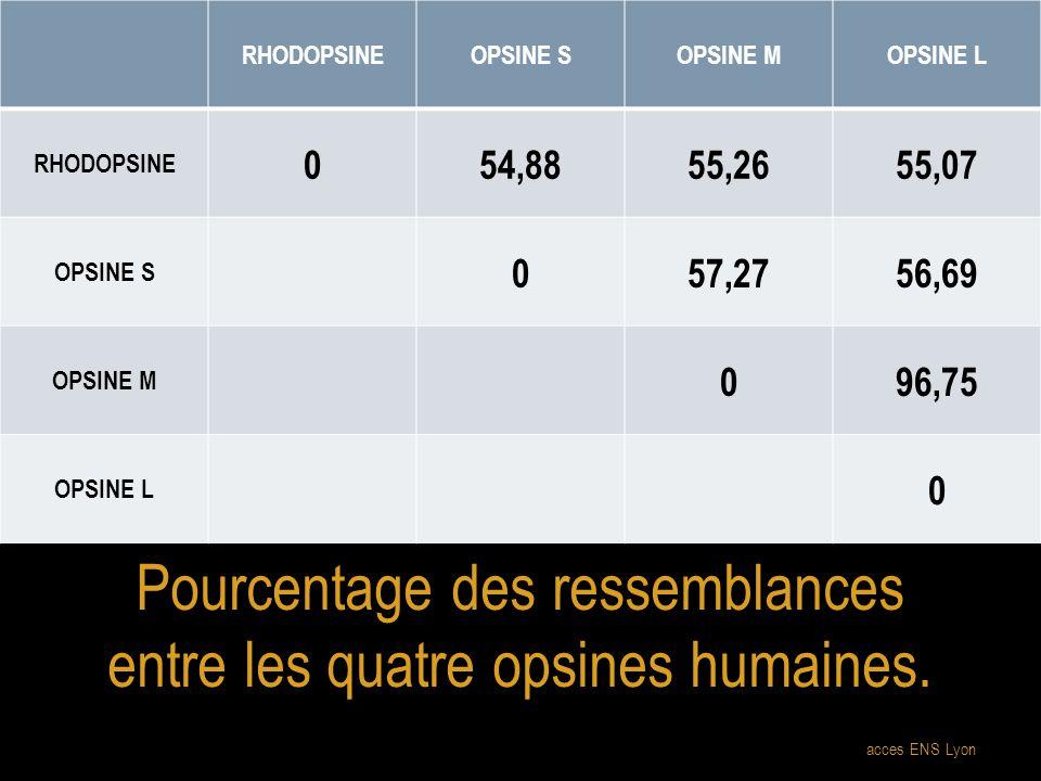 Pourcentage des ressemblances entre les quatre opsines humaines.