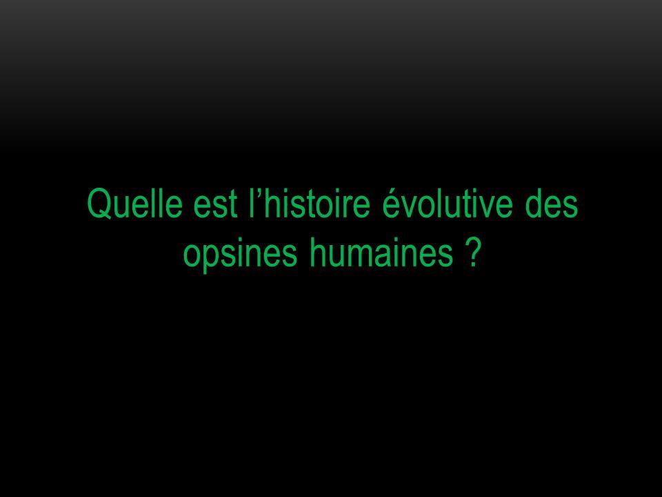 Quelle est l'histoire évolutive des opsines humaines