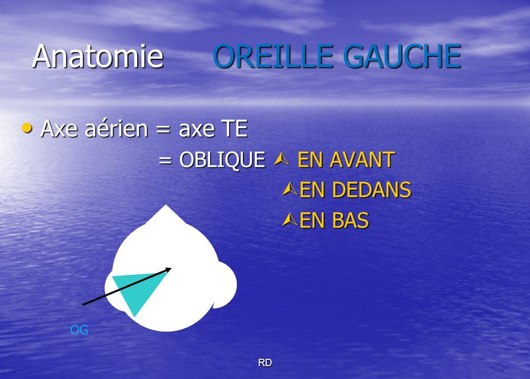 Anatomie OREILLE GAUCHE