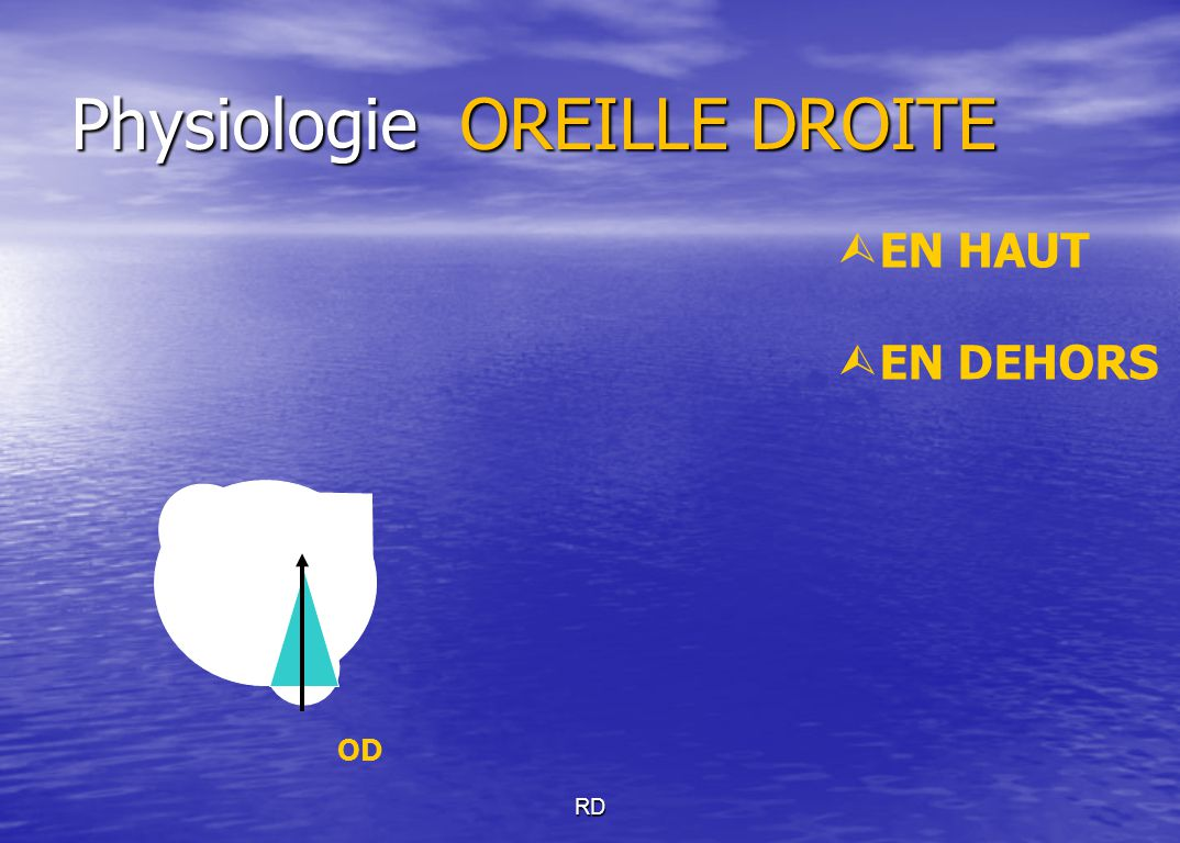 Physiologie OREILLE DROITE