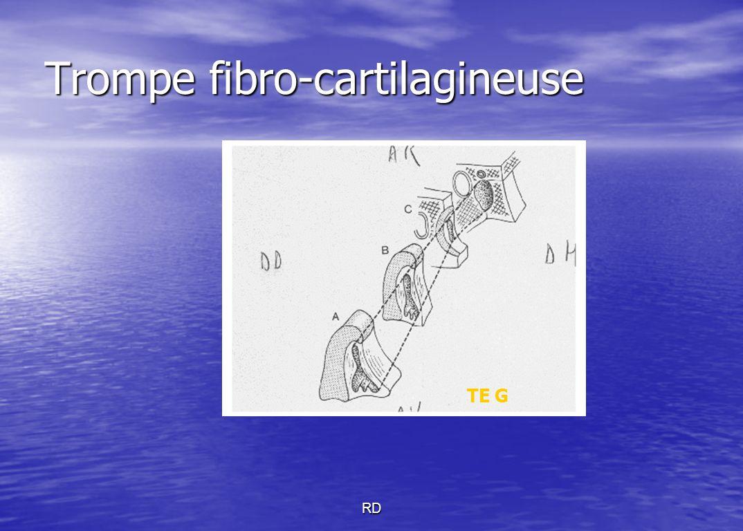 Trompe fibro-cartilagineuse