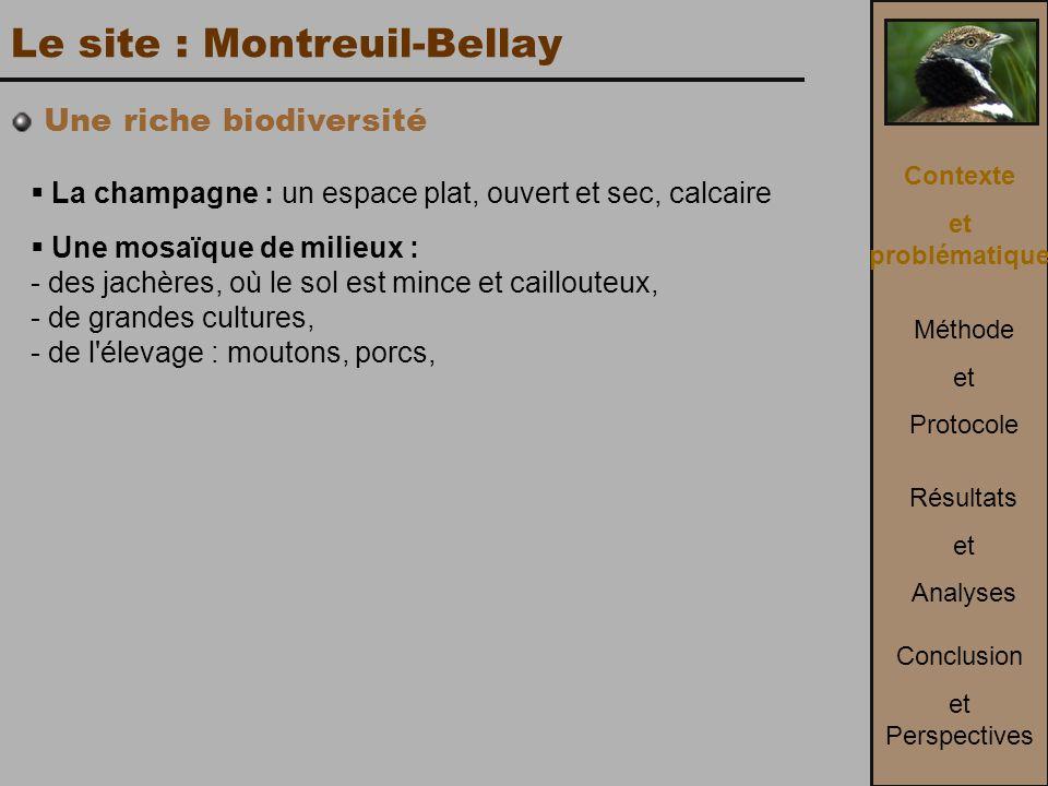 Le site : Montreuil-Bellay