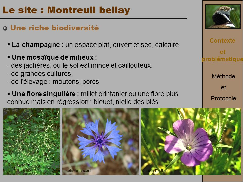 Le site : Montreuil bellay