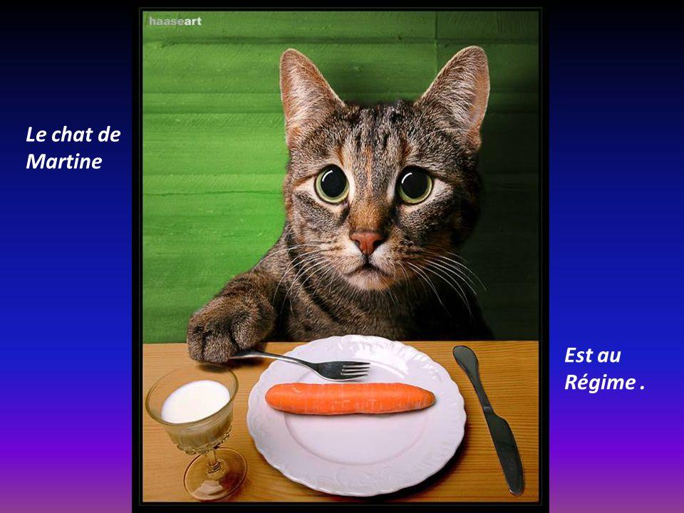 Le chat de Martine Est au Régime .