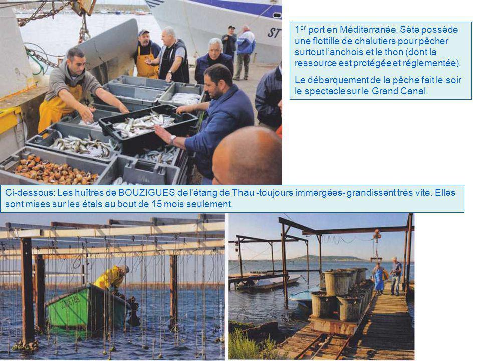 1er port en Méditerranée, Sète possède une flottille de chalutiers pour pêcher surtout l'anchois et le thon (dont la ressource est protégée et réglementée).