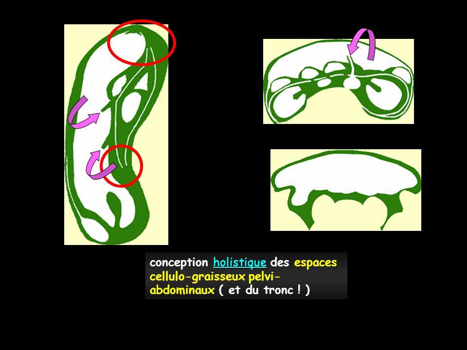 conception holistique des espaces cellulo-graisseux pelvi-abdominaux ( et du tronc ! )