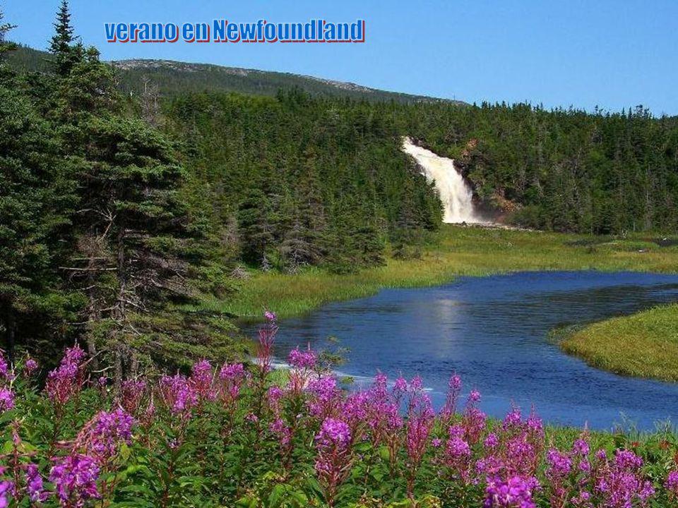 verano en Newfoundland