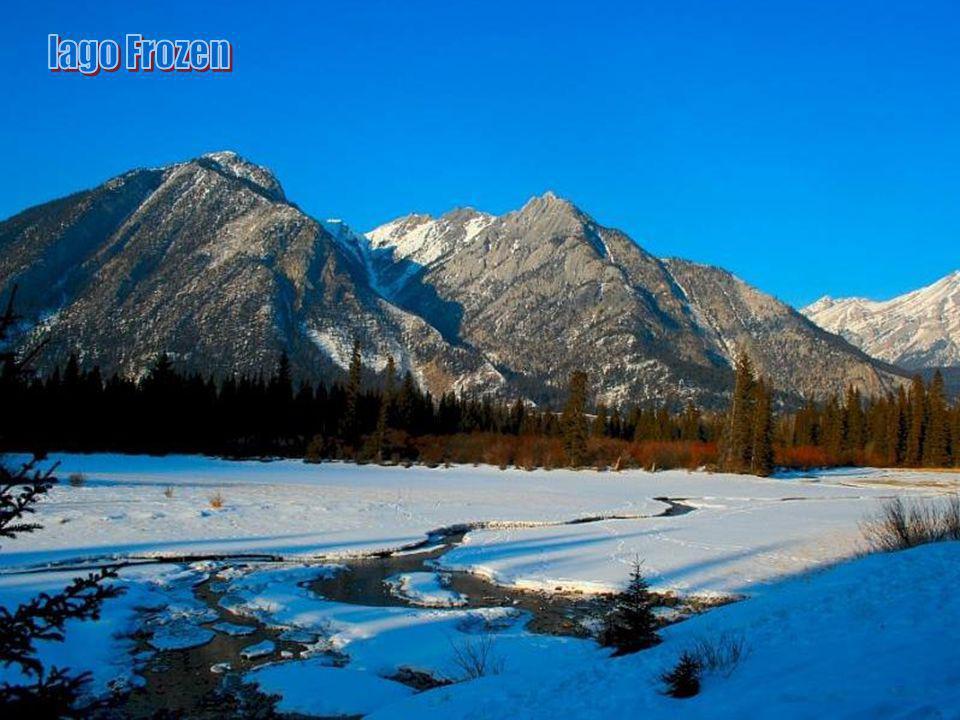 lago Frozen