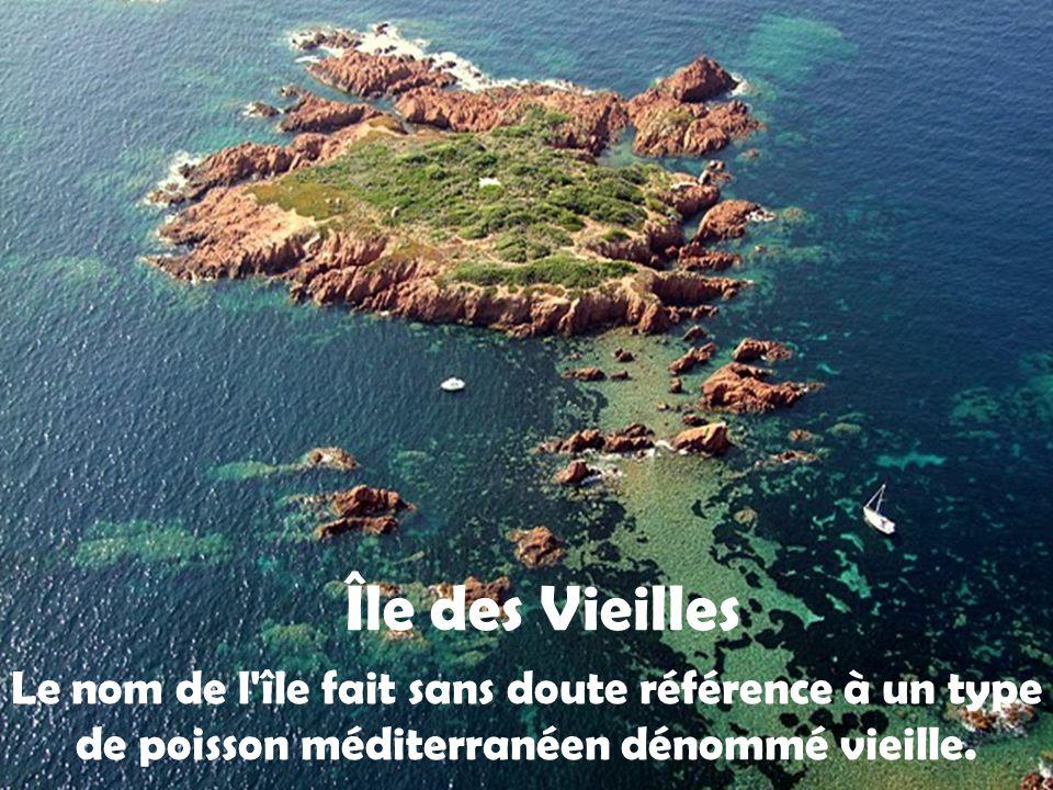 Île des Vieilles Le nom de l île fait sans doute référence à un type de poisson méditerranéen dénommé vieille.