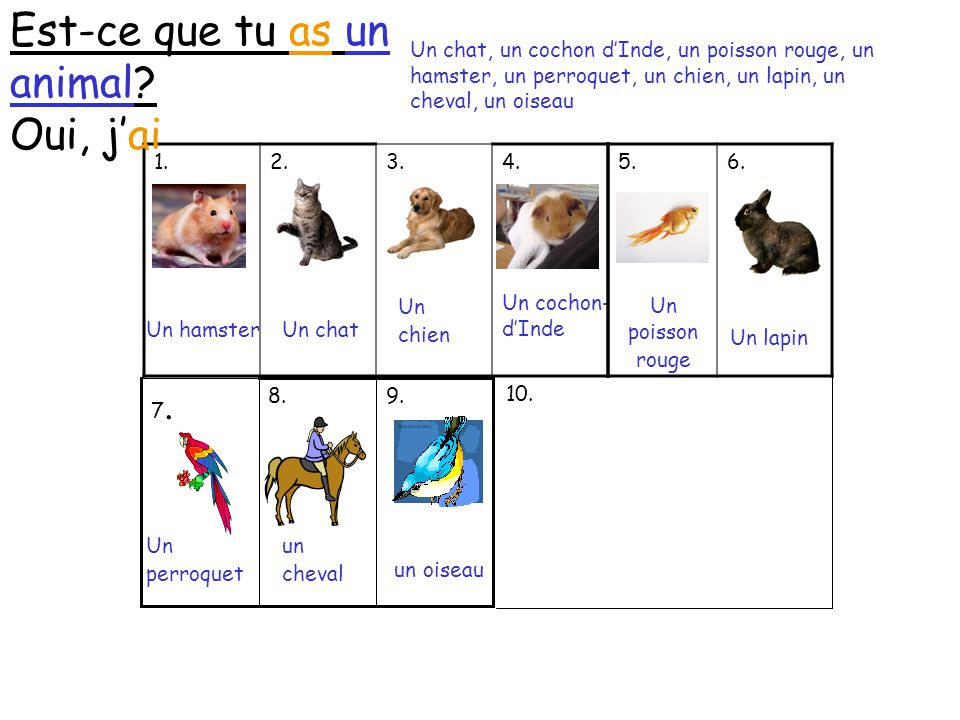 Est-ce que tu as un animal