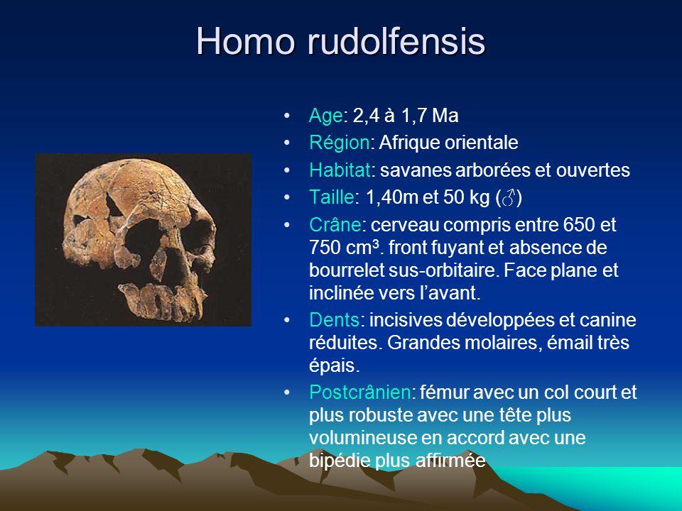 Homo rudolfensis Age: 2,4 à 1,7 Ma Région: Afrique orientale