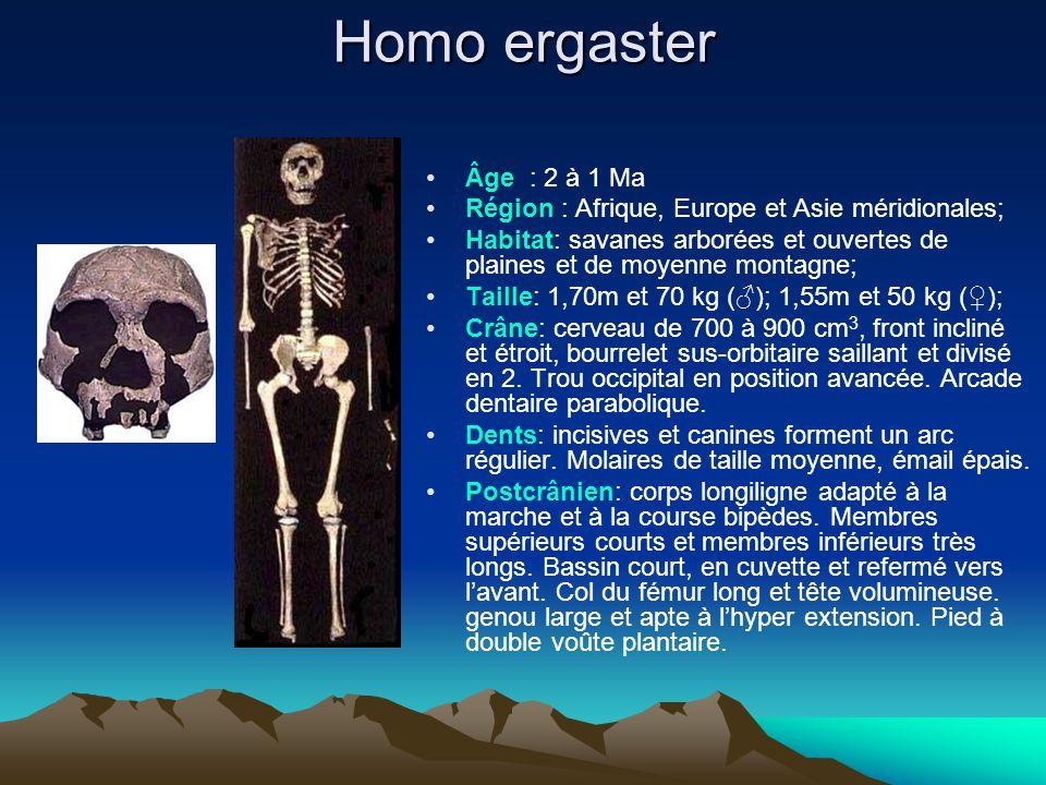 Homo ergaster Âge : 2 à 1 Ma. Région : Afrique, Europe et Asie méridionales;