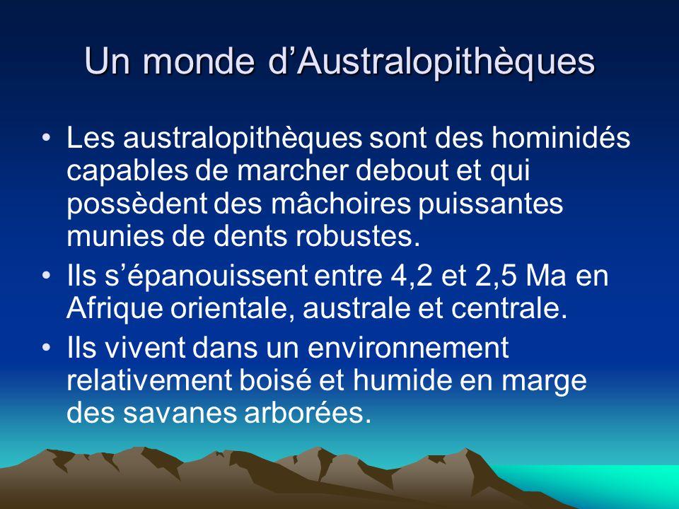 Un monde d'Australopithèques
