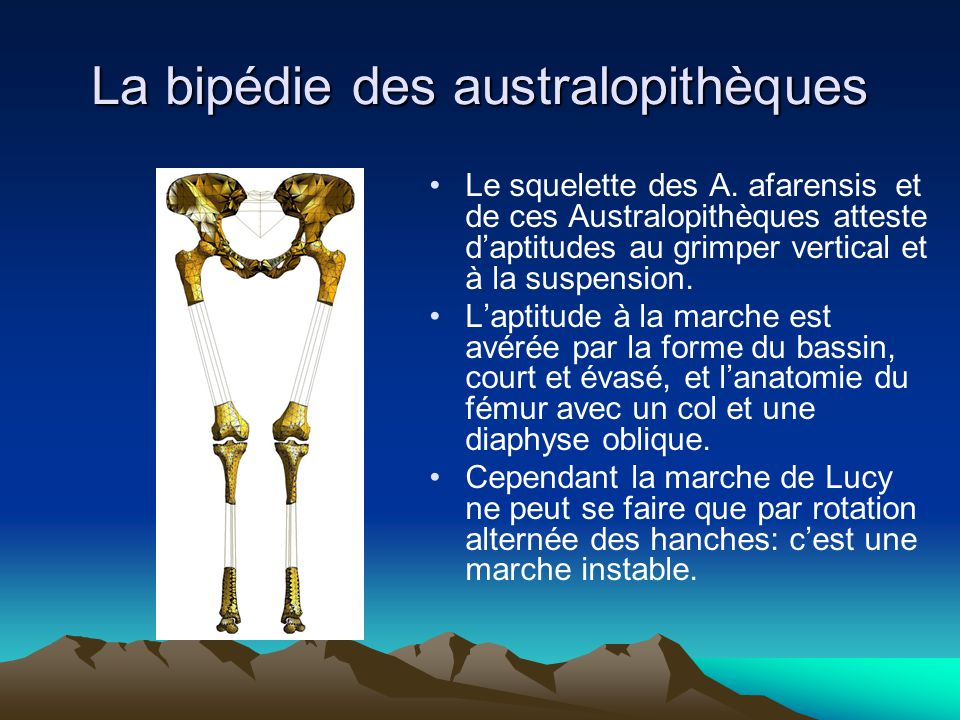 La bipédie des australopithèques