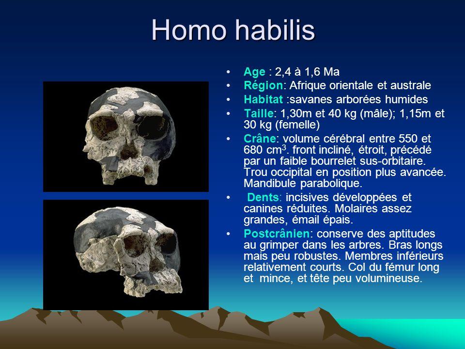 Homo habilis Age : 2,4 à 1,6 Ma Région: Afrique orientale et australe