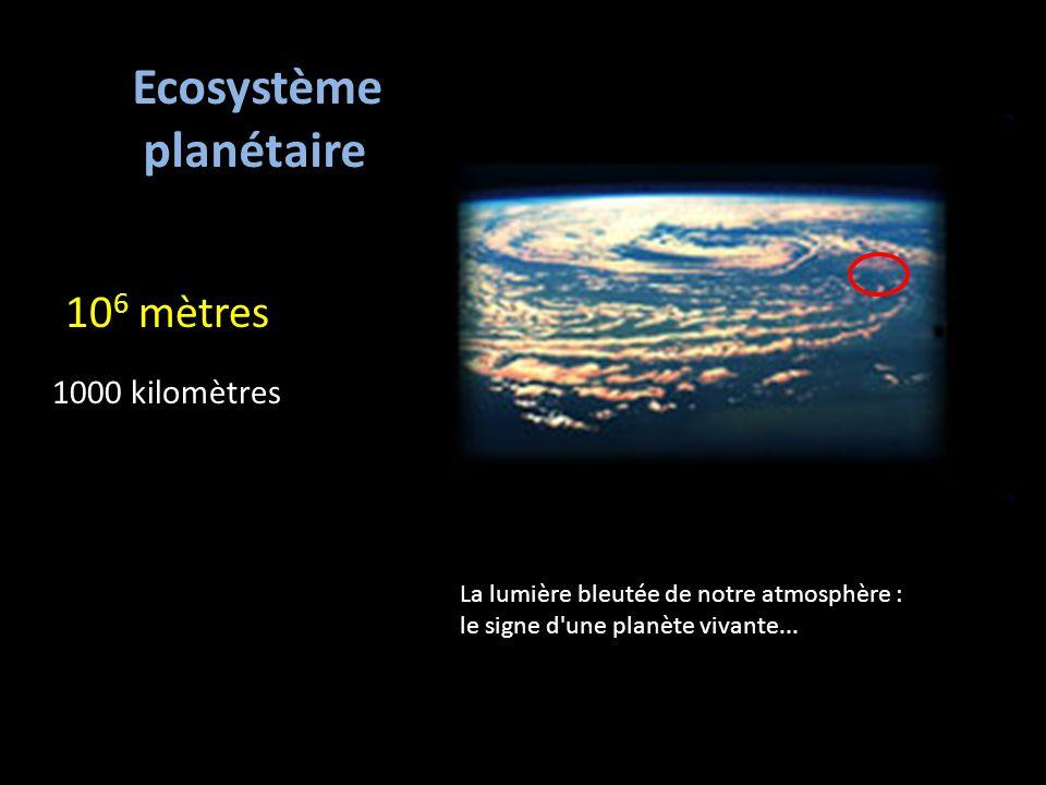 Ecosystème planétaire