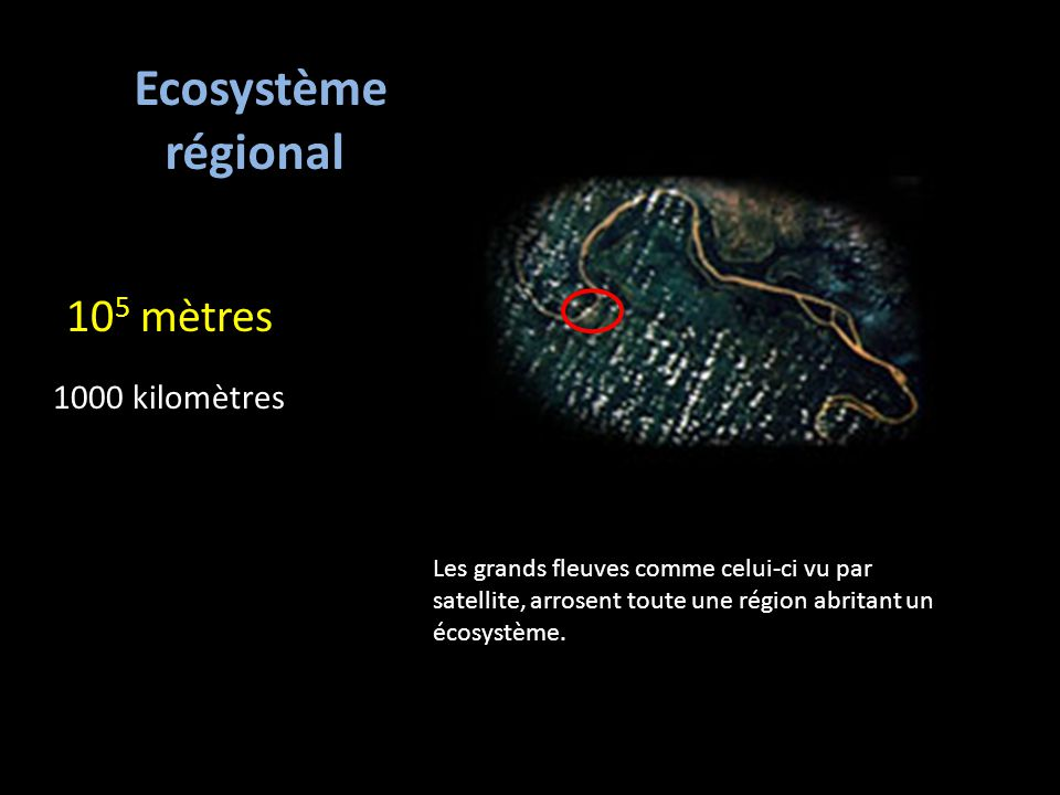 Ecosystème régional 105 mètres 1000 kilomètres