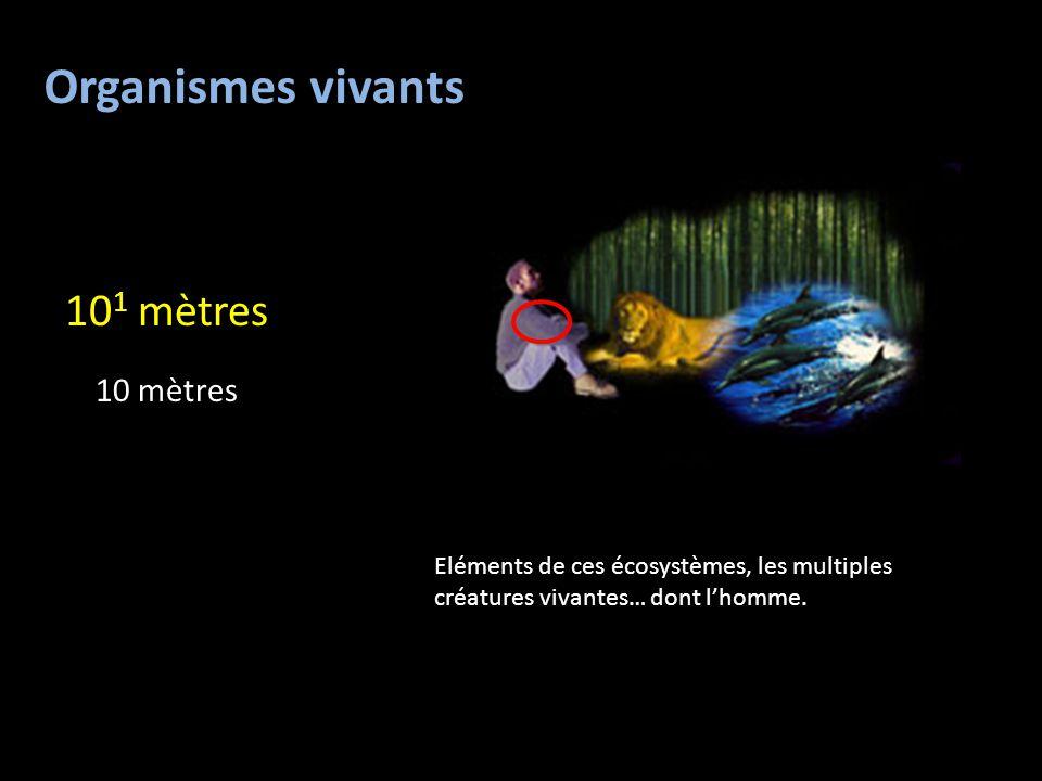 Organismes vivants 101 mètres 10 mètres