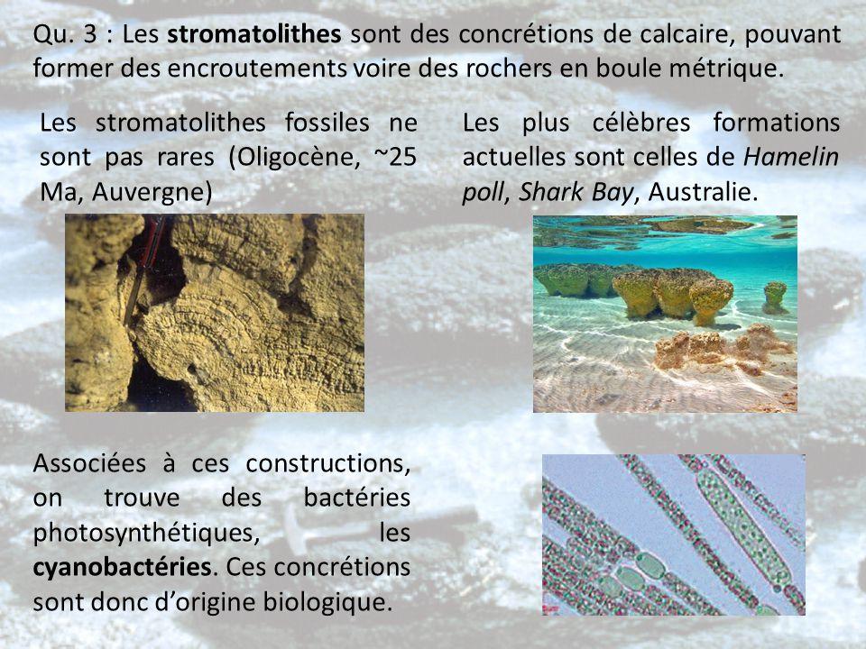 Qu. 3 : Les stromatolithes sont des concrétions de calcaire, pouvant former des encroutements voire des rochers en boule métrique.