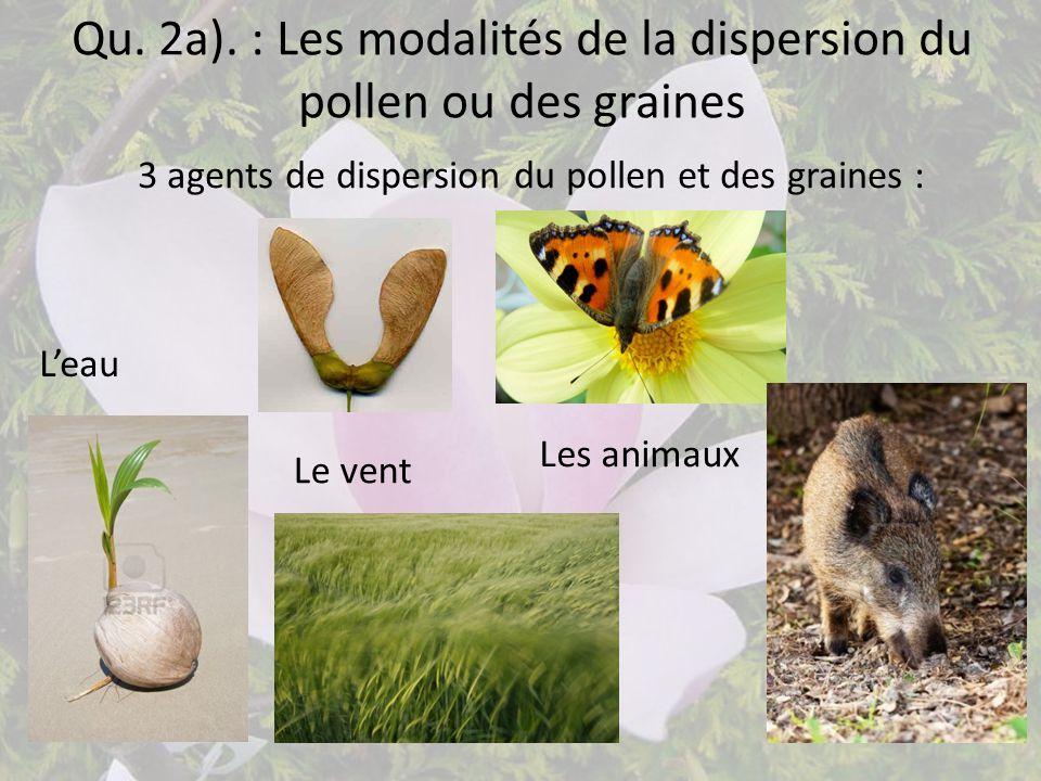 Qu. 2a). : Les modalités de la dispersion du pollen ou des graines