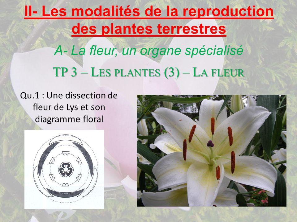 II- Les modalités de la reproduction des plantes terrestres