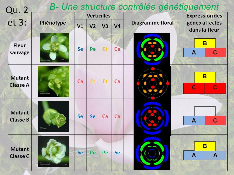 Expression des gènes affectés dans la fleur