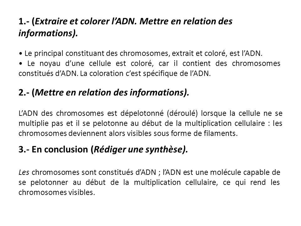 1.- (Extraire et colorer l'ADN. Mettre en relation des informations).