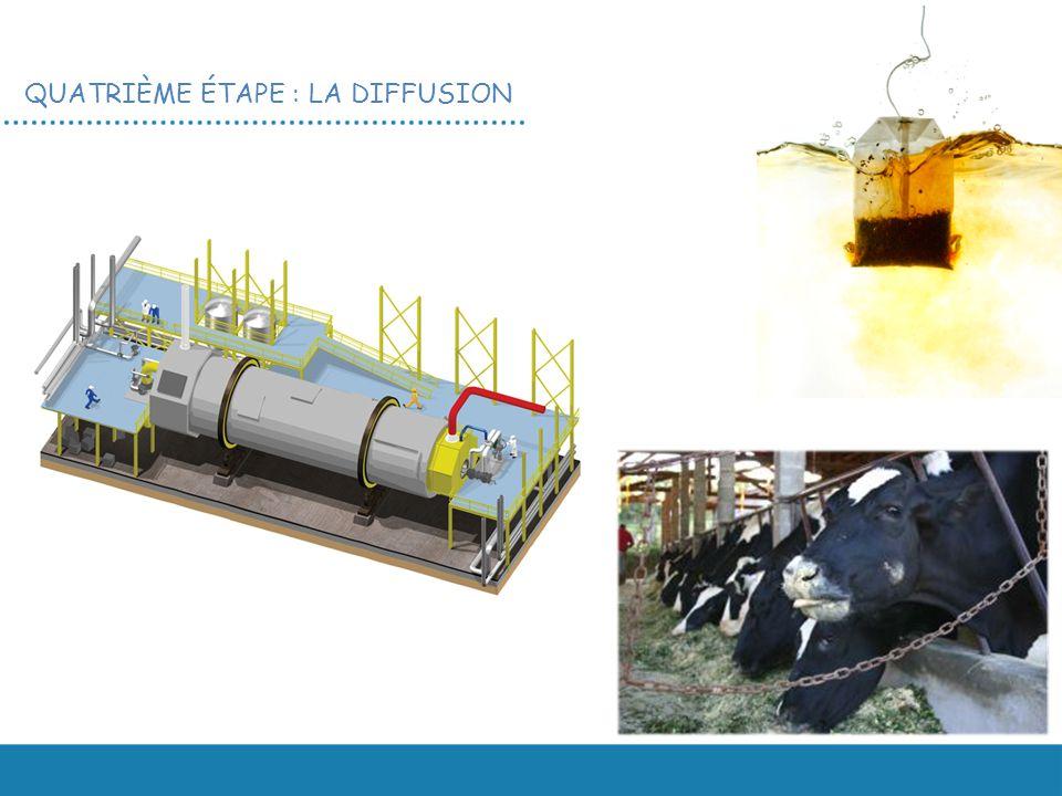 Les cossettes vidées de leur sucre sont ensuite données au bétail.