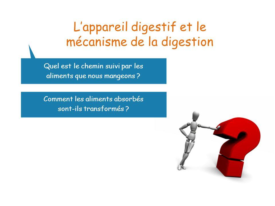 L'appareil digestif et le mécanisme de la digestion