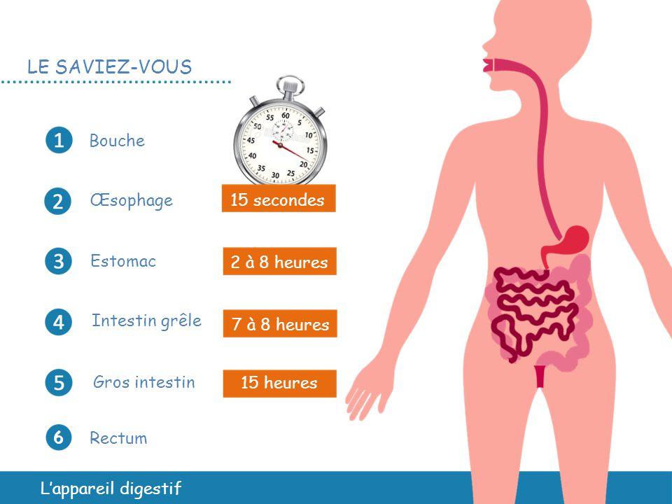 LE SAVIEZ-VOUS Bouche œsophage 15 secondes Estomac 2 à 8 heures