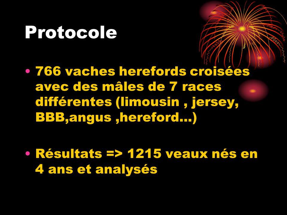 Protocole 766 vaches herefords croisées avec des mâles de 7 races différentes (limousin , jersey, BBB,angus ,hereford…)