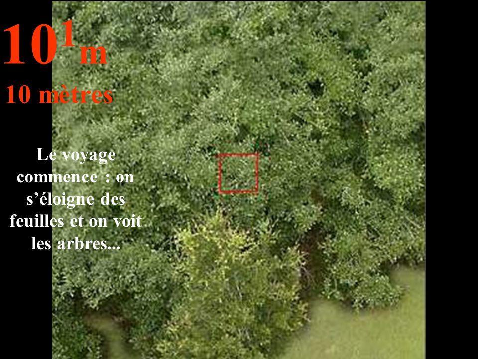101m 10 mètres Le voyage commence : on s'éloigne des feuilles et on voit les arbres...
