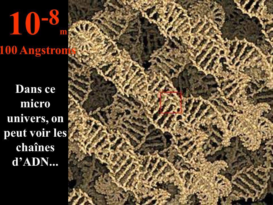 Dans ce micro univers, on peut voir les chaînes d'ADN...