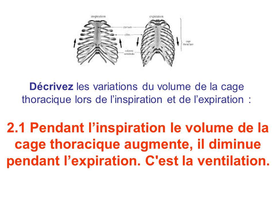 Décrivez les variations du volume de la cage thoracique lors de l'inspiration et de l'expiration :