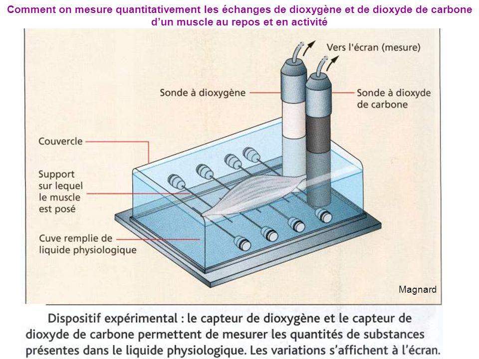 Comment on mesure quantitativement les échanges de dioxygène et de dioxyde de carbone d'un muscle au repos et en activité