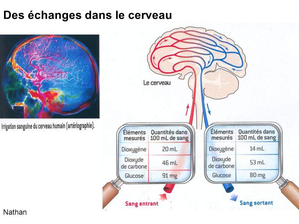 Des échanges dans le cerveau